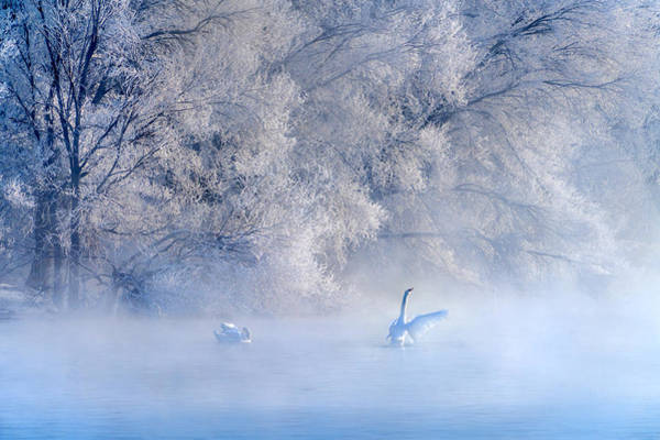 Swan Photograph - Swan Lake by Hua Zhu