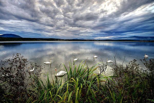 Photograph - Swan Lake by Ivan Slosar