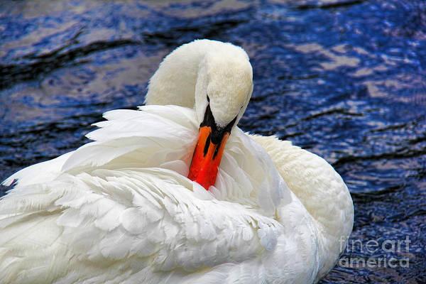 Wall Art - Photograph - Swan Lake by Mariola Bitner