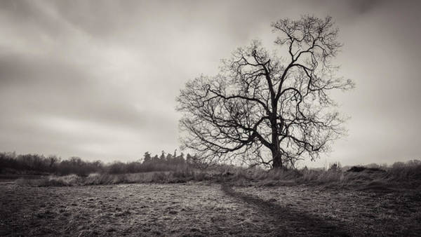 Photograph - Swan Lake Oak by Carrie Cole