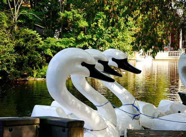 Photograph - Swan Lake by Richard Reeve