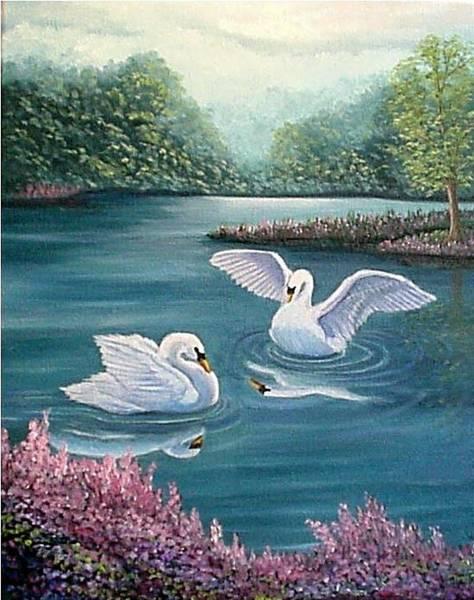 Swan Lake Serenity Art Print