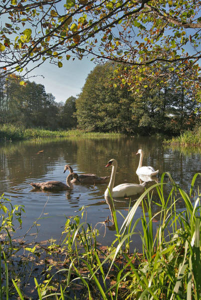 Photograph - Swan Lake by Dreamland Media
