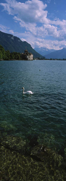 Wall Art - Photograph - Swan Swimming In A Lake With A Castle by Animal Images