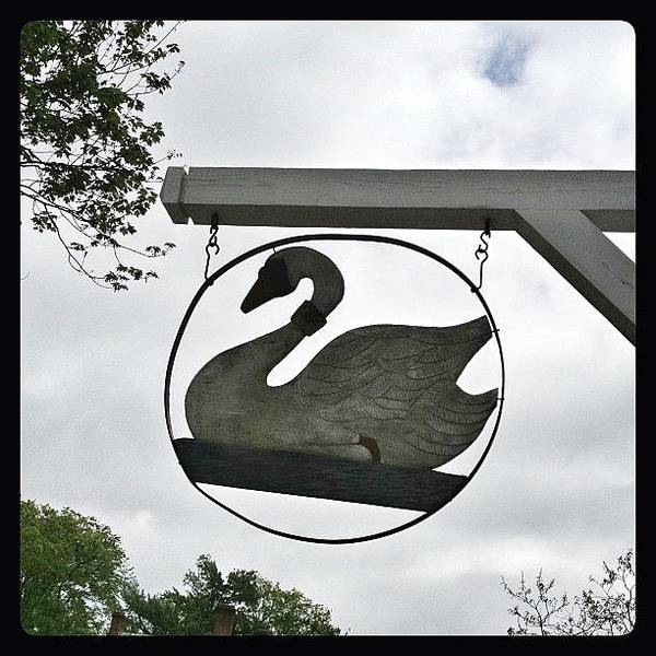 Bird Photograph - Swan Tavern In Yorktown. #yorktown by Teresa Mucha