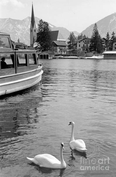 Swan Boats Photograph - Swans In Lake by Julie Von Knorr Wedekind