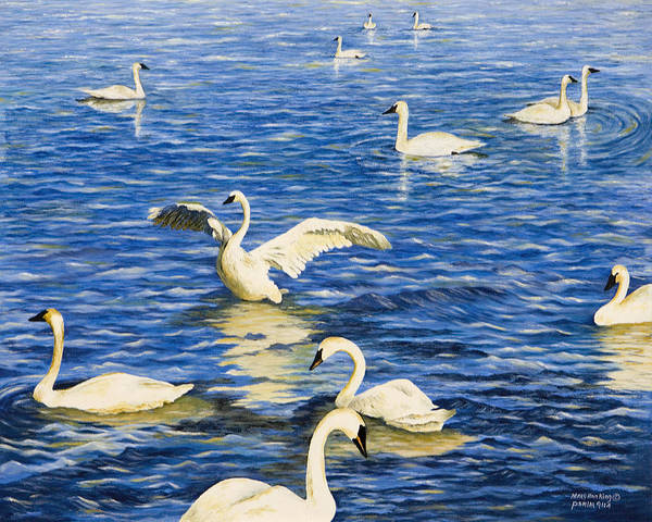 Trumpeter Swan Painting - Swans In Late Afternoon by Mary Ann King