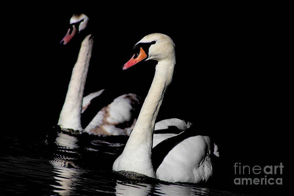 Painting - Swans Through The Darkness by Sue Harper