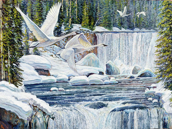Trumpeter Swan Painting - Swans Over Collonade Falls by Steve Spencer