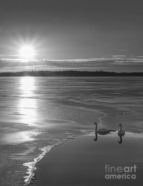 Nikon D800 Wall Art - Photograph - Swans Sunrise Bw by Michael Ver Sprill