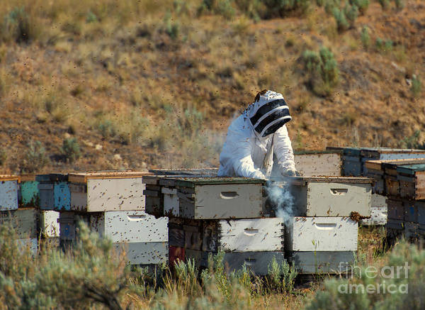 Bee Hive Photograph - Swarmed by Mike  Dawson