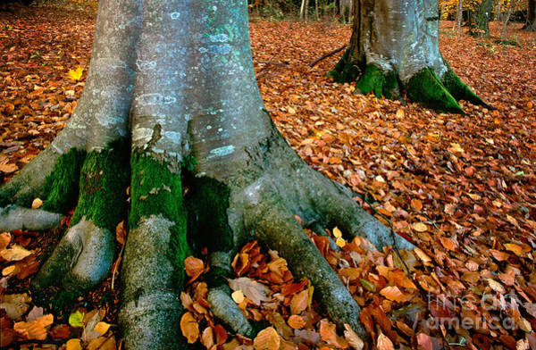Scandinavia Photograph - Swedish Beech Forest by Inge Johnsson