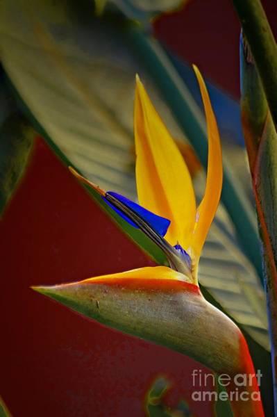 Sweet Bird In Veracruz Art Print