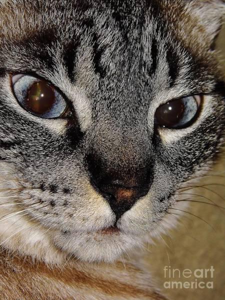 Photograph - Cat - Sweet - Boy by D Hackett