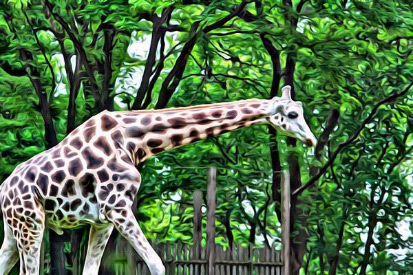 Photograph - Sweet Giraffe by Alice Gipson