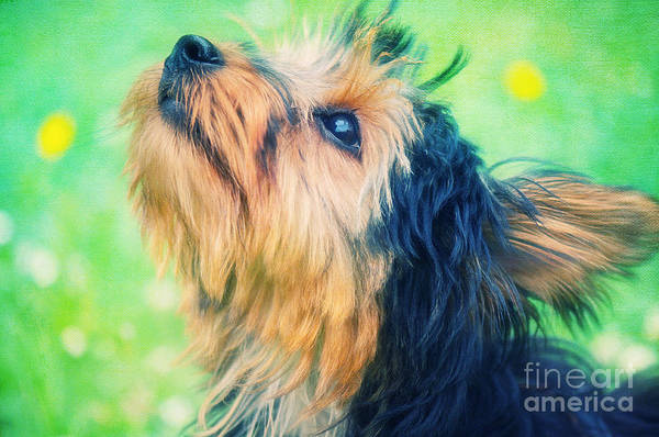Photograph - Sweet Little Dog by Angela Doelling AD DESIGN Photo and PhotoArt