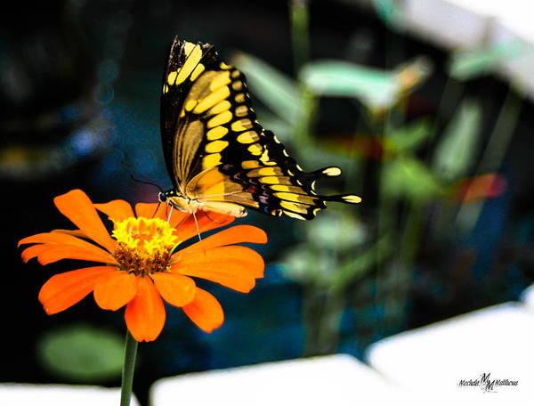 Wall Art - Photograph - Sweet Nectar by Mechala Matthews