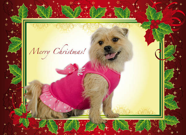 Photograph - Sweet Pea Christmas Card by Irina ArchAngelSkaya