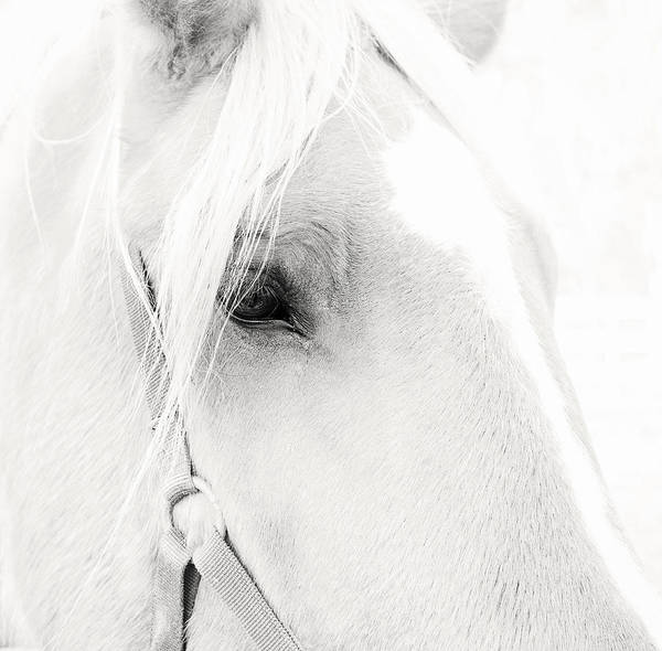 Photograph - Sweet Soul Belgian Horse Black And White by Terry DeLuco