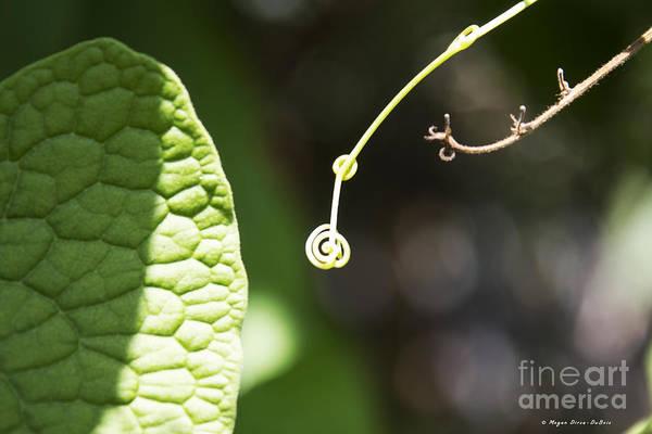 Photograph - Sweet Tendril by Megan Dirsa-DuBois