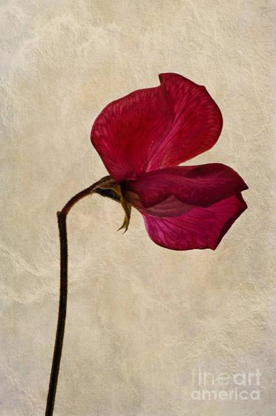 Pea Digital Art - Sweet Textures by John Edwards
