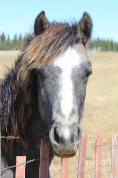 Photograph - Sweetie Pie Horse by Donna L Munro