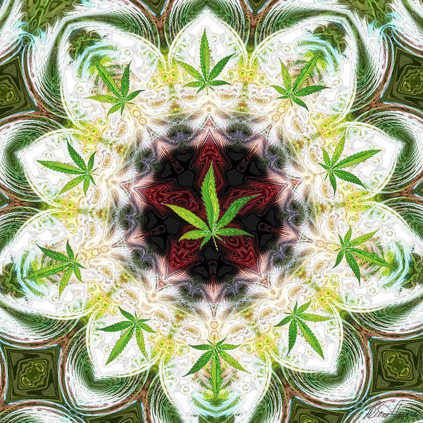 Digital Art - Sweetleaf Mandala by Diana Haronis
