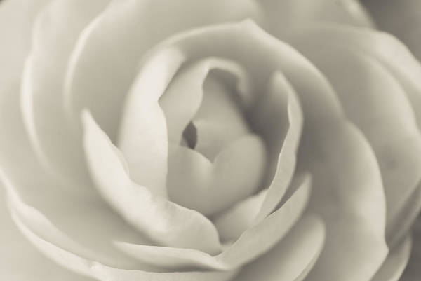 Photograph - Sweetness by Fran Riley