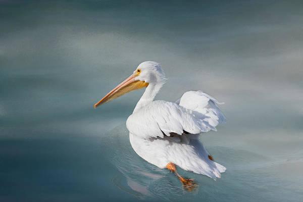 American White Pelican Wall Art - Photograph - Swimming Away by Kim Hojnacki