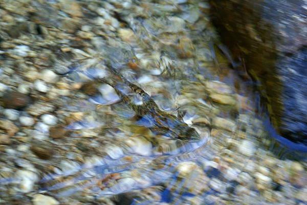 Photograph - Swimming Frog by Ben Upham III