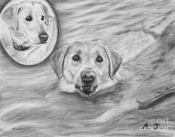 Drawing - Swimming Labrador by Kate Sumners