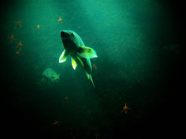 Photograph - Swimming Toward The Light by Micki Findlay