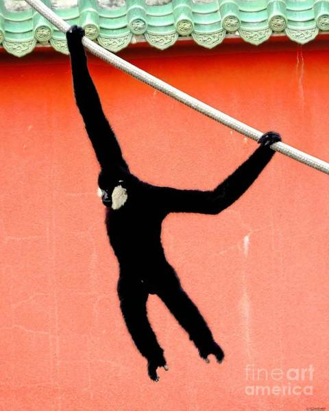 Photograph - Swing Dance Gibbon Male by Lizi Beard-Ward