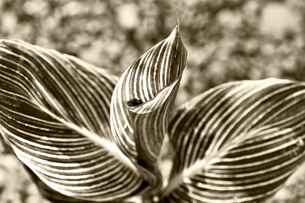 Photograph - Swirls And Stripes by Melinda Ledsome