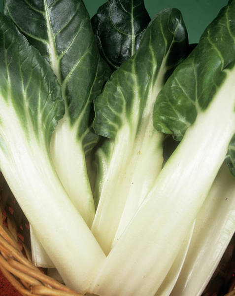 Perpetual Photograph - Swiss Chard by Ray Lacey/science Photo Library