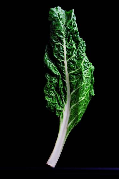 Green Vegetable Photograph - Swiss Chard by Romulo Yanes