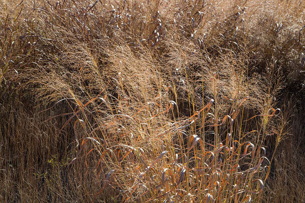 Photograph - Switchgrass In Autumn by Steven Schwartzman