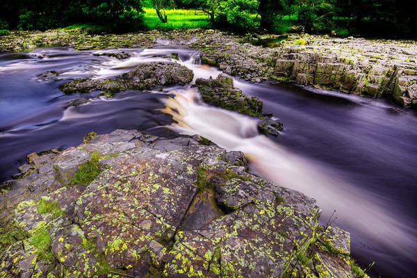 Photograph - Swooping River Tees by Dennis Dame