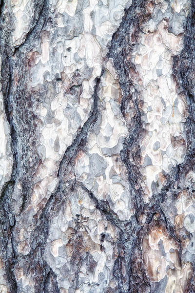 Forestry Photograph - Sycamore Bark Abstract by Tom Mc Nemar