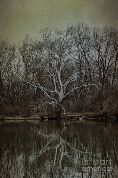Roosevelt Island Wall Art - Photograph - Sycamore Dancer by Terry Rowe