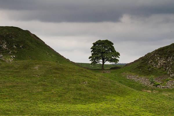 Hadrians Wall Photograph - Sycamore Gap Northumbria by Wayne Molyneux