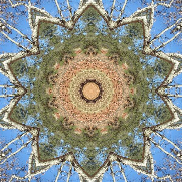 Digital Art - Sycamore Splendor by Trina Stephenson
