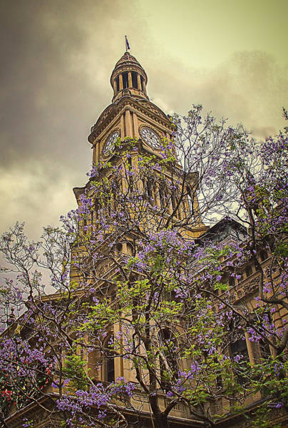Photograph - Sydney Town Hall by Julie Palencia