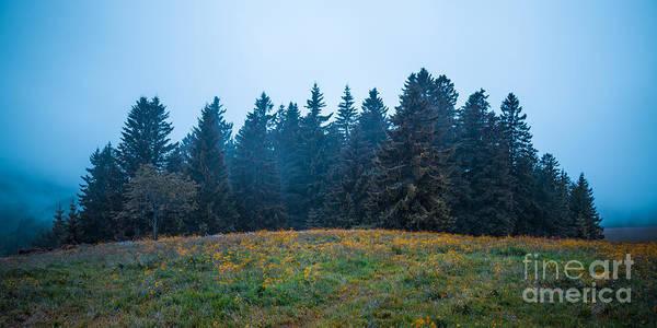 Photograph - Sylvan Mist by Alexander Kunz