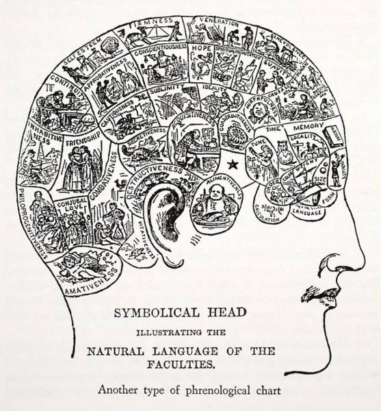 History Of Science Wall Art - Drawing - Symbolical Head by English School