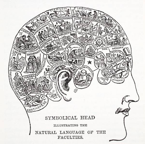 History Of Science Wall Art - Drawing - Symbolical Head Showing The Natural by English School