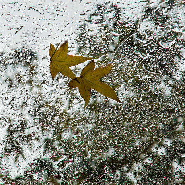 Symbols Of Autumn  Art Print