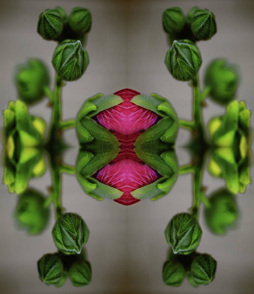 Hollyhock Photograph - Symmetric Digital Composition Of by Silvia Otte