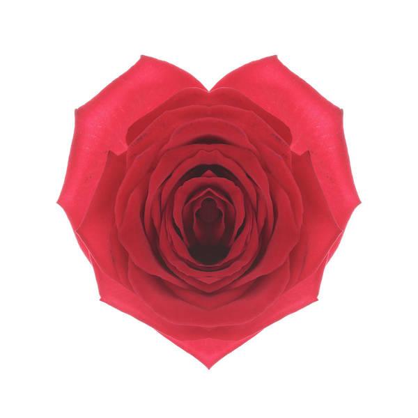 Vitality Photograph - Symmetrical Rose Heart Mark by Fuhito Kanayama