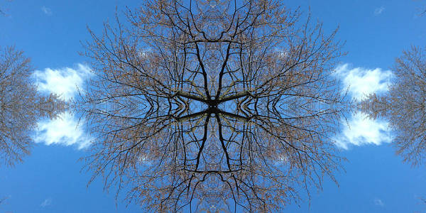 Photograph - Symmetry by Cristina Stefan